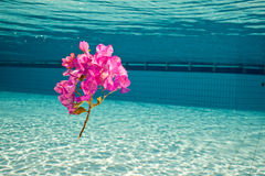 A flower under the water Royalty Free Stock Images