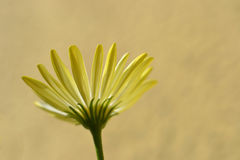 Flower underneath. To see the flower from underneath Royalty Free Stock Image