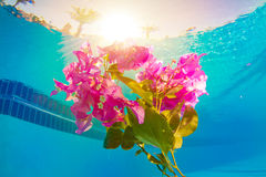 Flower underwater Stock Image