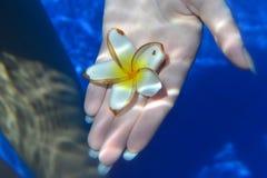 Flower underwater Stock Images