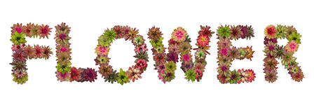 Flower uppercase letters Stock Images