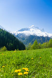 Flower valley near Mont Blanc, Alps Stock Photo