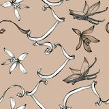Flower vanilla sketch seamless pattern Stock Photos