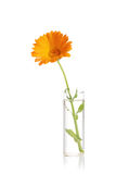 Flower in a vase Royalty Free Stock Images