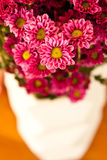 Flower in vase Stock Photography