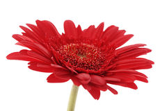 Flower in vase Royalty Free Stock Photos
