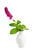 Flower in a vase Stock Photos