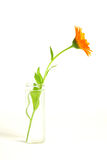 Flower in a vase. Orange flower in a vase with water Stock Photo