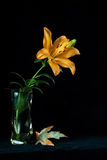 Flower in a vase. The beautiful flower is in the vase on the table  on a black background Stock Images