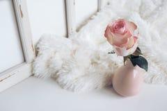 Flower, Vase, Display, Fur, Design Stock Photography