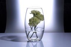 Flower vase Stock Images