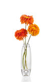 Flower in vase royalty free stock photos