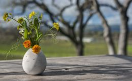 Flower Vase on Picnic Table in Sonoma. A Delicate Flower Vase on a Wooden Picnic Table Sings in the Low Winter Sun with the Sonoma Valley Vineyards in the Stock Image