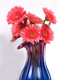 Flower vase with pink daisy flowers Royalty Free Stock Photos