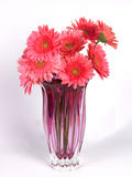 A flower vase with pink daisy flowers. A pink flower vase with pink daisy flowers Royalty Free Stock Photography