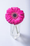 Flower in vase Royalty Free Stock Photography