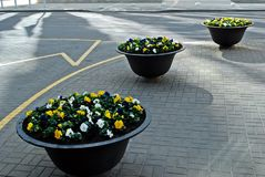 Flower vases in the Vilnius city street Royalty Free Stock Images