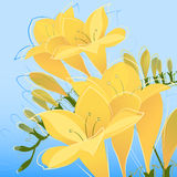 Flower vector Royalty Free Stock Images