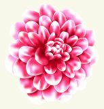 Flower vector Royalty Free Stock Photo