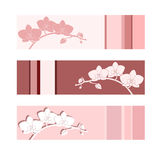 Flower vector background. Royalty Free Stock Images