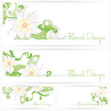 Flower vector background brochure. Floral cards Stock Photo