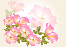 Flower vector  background with wild rose. Abstract flower backdrop Stock Photo