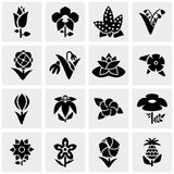 Flower vector icons set on gray. Flower icons set on grey background.EPS file available Stock Photography