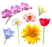 Flower vector set. Orchid, tulip, chamomile, lily, bluebell and daisy Royalty Free Stock Image