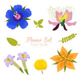 Flower Vector Set Element. Vector Collection Isolated On White Background. Royalty Free Stock Photo