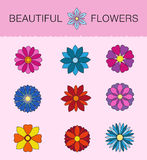 Flower vector set. Illustration of flowers in graphic style modern design, blue, pink, black woodpecker, red Royalty Free Stock Photo