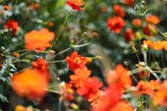 Flower, Vegetation, Flora, Wildflower Stock Photography