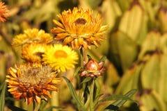 Flower, Vegetation, Flora, Wildflower Stock Photo