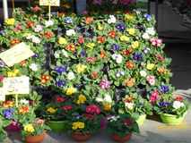 Flower Display at Outdoor Market in Italy. Flower vendor`s display at outdoor market in Padua, Italy Stock Images