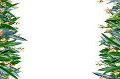 Flower Vertical Frame. Isolate Background Flower Vertical Frame Royalty Free Stock Photography