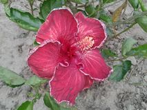 Flower. View of Flower at West Bengal, India Stock Image