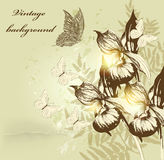 Flower vintage background with orchids Royalty Free Stock Image