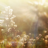 Flower-6. Vintage flower background in summer style Stock Photography