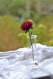 Flower in a vintage bottle Stock Images