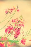 Flower vintage color Royalty Free Stock Photos