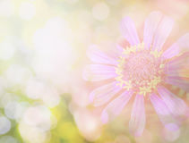 Flower in vintage color Royalty Free Stock Photography