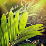 Flower-7. Vintage palm background in summer style Royalty Free Stock Photo