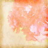 Flower vintage paper bacground Royalty Free Stock Photos