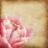 Flower vintage paper. The old paper with floral pattern Stock Images
