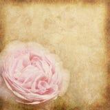 Flower vintage paper. Old vintage paper with pink rose pattern Stock Photo