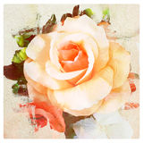 Flower vintage, rose with paper texture background Stock Photo