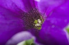 Flower of violet color Stock Image