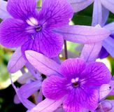 Flower. Violet plant nature organic Royalty Free Stock Image
