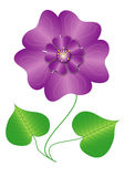 Flower violet. Vector Illustration violet fragrance in isolated background Stock Photos