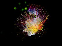 Flower_vivid obrazy royalty free