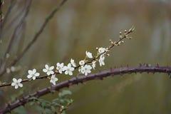 Flower vs Thorn Stock Photos